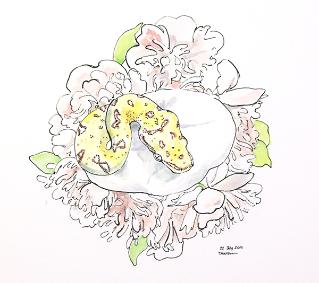 watercolor-ink-python-Taylor-Wilkes.jpg