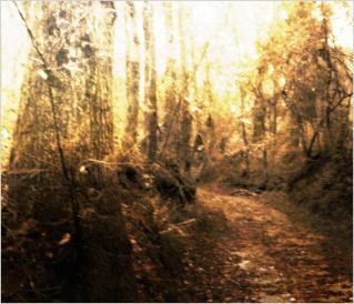 digitalart-Behrnes-3.jpg