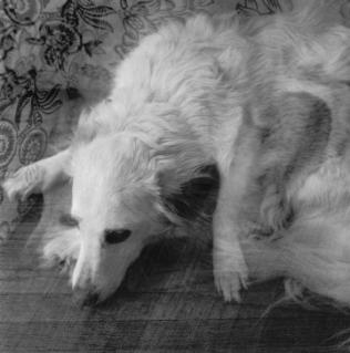 Daba King, Double Dog, 2012