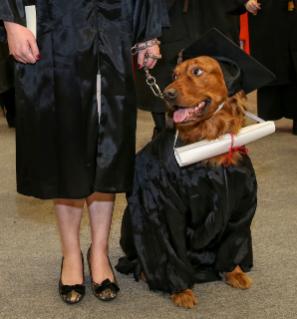 Dog-grad-.jpg