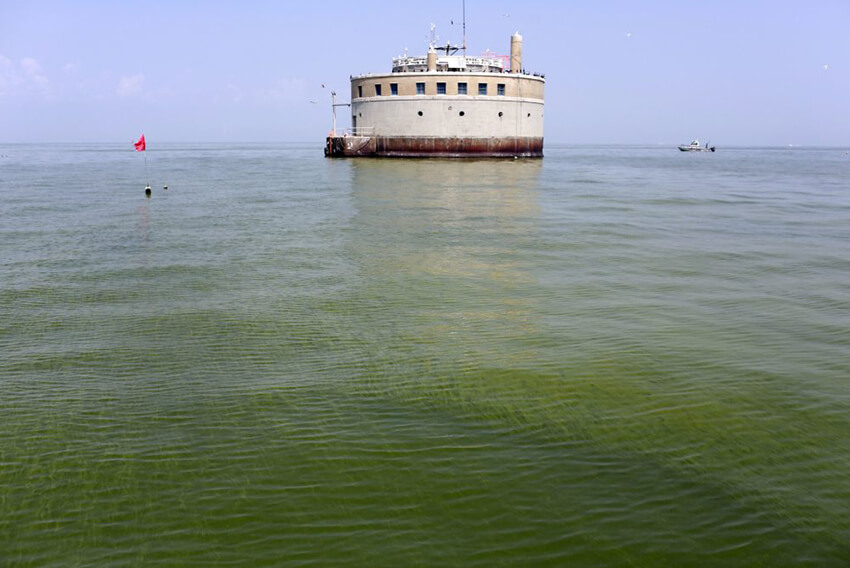 Algae Bloom Covers 700 Square Miles of Lake Erie
